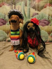25+ best ideas about Funny Dog Costumes on Pinterest ...