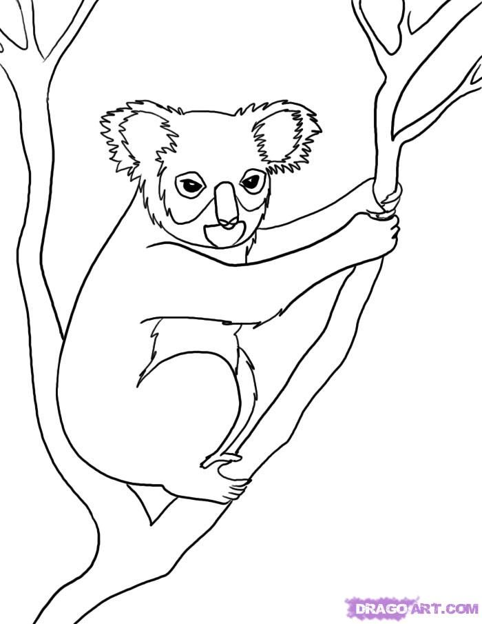 17 Best images about Australian Anlmals Theme on Pinterest