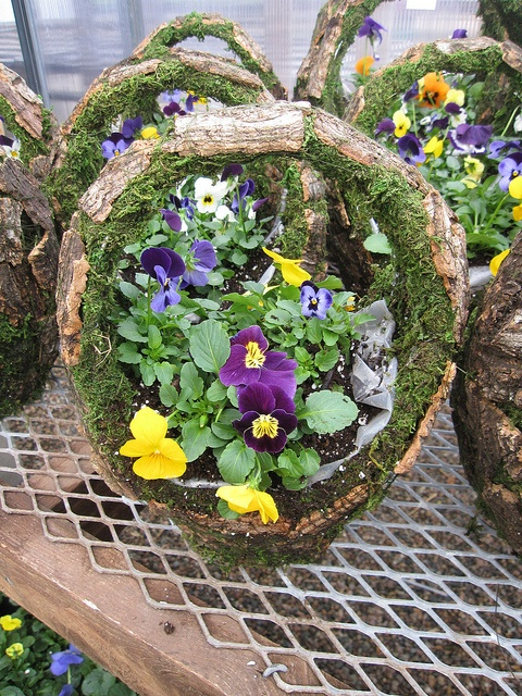 108 Best Images About Pansies Bratki On Pinterest Gardens