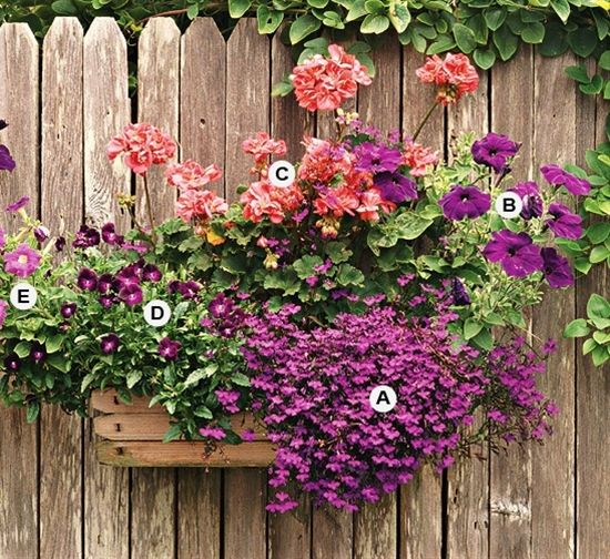 17 Best Images About Container Garden Ideas On Pinterest
