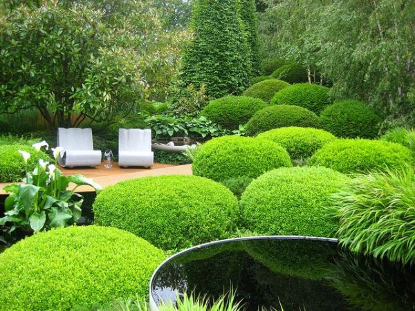 pleached hedges topiary