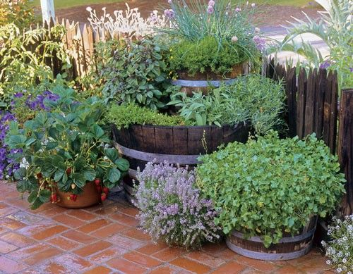 25+ Best Ideas About Winter Container Gardening On