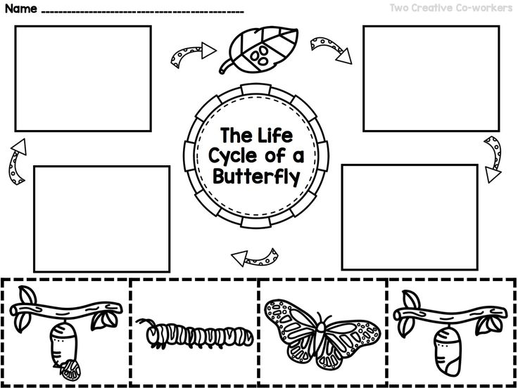 Teach your students about the Life Cycle of a Butterfly