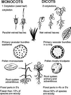 63 best Plant Structure and ID images on Pinterest
