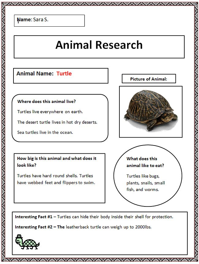 Common Core Animal Research Graphic Organizer Finished