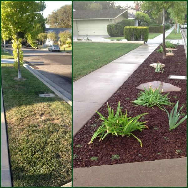 grass parkway turned drought tolerant