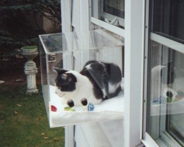 Cat Window Window Seats And Window On Pinterest