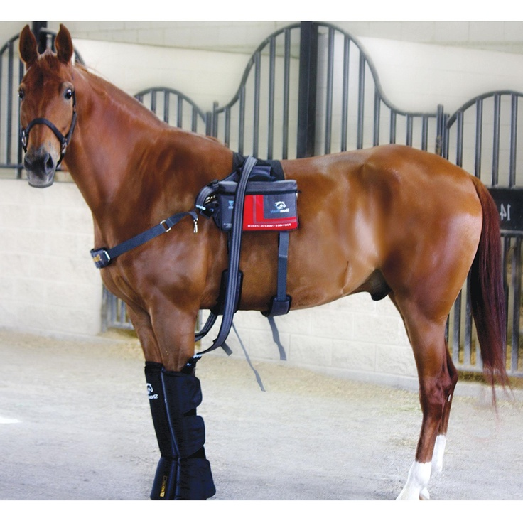 1000 images about Equine Cryotherapy hotcold