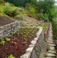 27 best images about Steep Garden Ideas on Pinterest ...