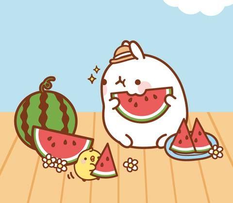 Cute Tofu Desktop Wallpaper Molang Sunny Day Watermelon Nosh Molang