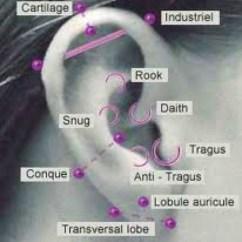 Different Ear Piercings Diagram Vw Passat Ccm Wiring Piercing Chart! | Pinterest Piercings, And