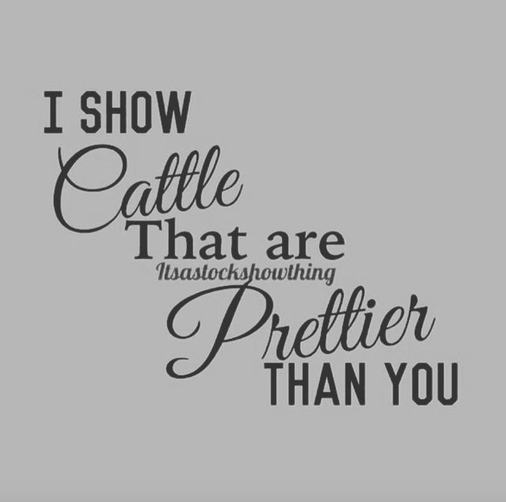 1171 best Show Cattle :) images on Pinterest