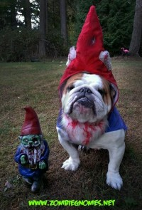 Zombie Gnome dog costume | ANIMALS: Doggone Good ...