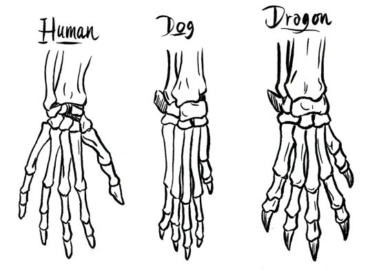 26 best images about How To Draw Dragon Feet and Dragon