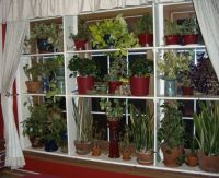 10 Best images about Plant shelves on Pinterest | The ...