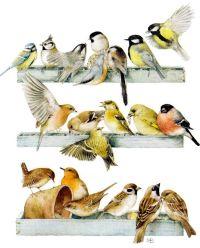 17 Best images about Decoupage on Pinterest | Birds ...