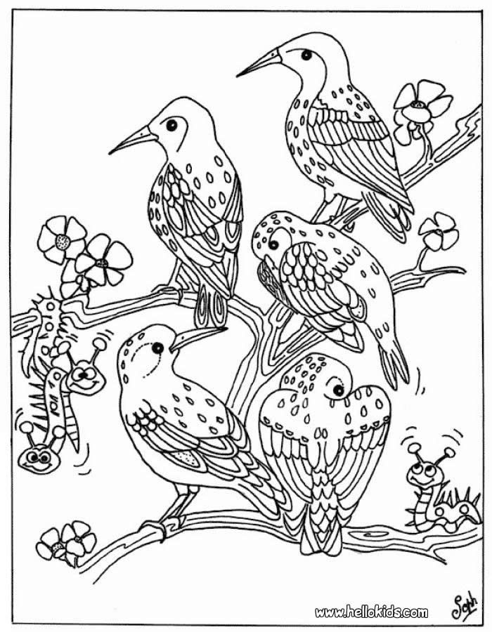 17 Best images about coloring pages birds on Pinterest