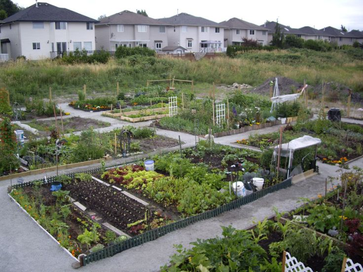 24 Best Images About Community Gardens On Pinterest Gardens