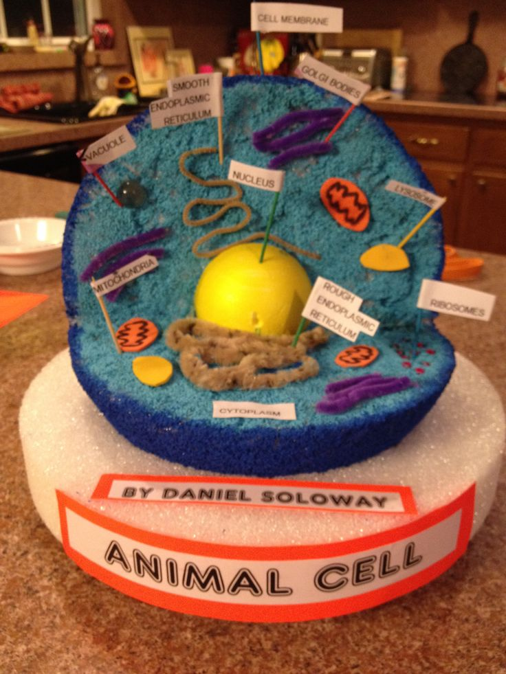 5th grade animal cell diagram plant and venn dans project | charlotte pinterest school projects, name labels