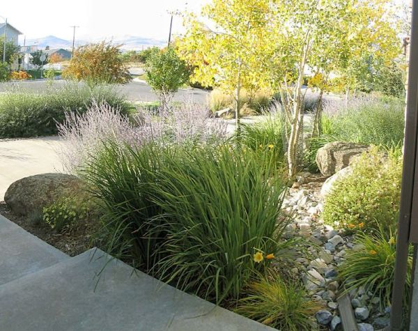 lawn ideas - grass and rocks