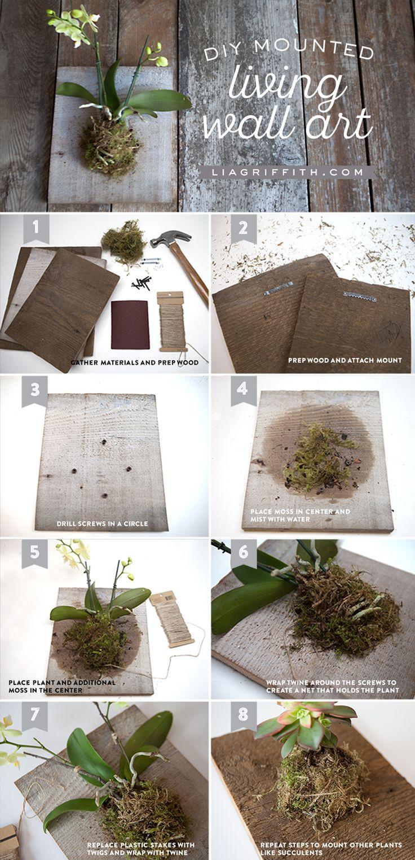 1000 Images About Plantes I Flors Plants On Pinterest