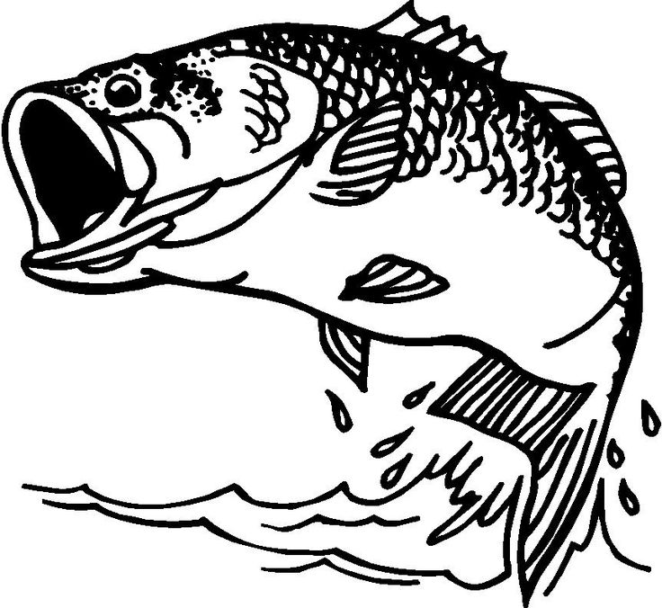 bass fish clip artBass Fish Clipart From Votes Quoteko