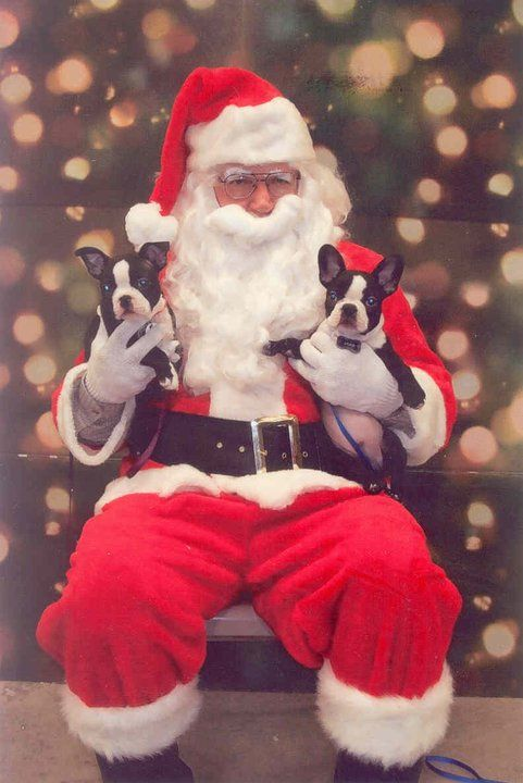 558 Best Images About Christmas Pets On Pinterest