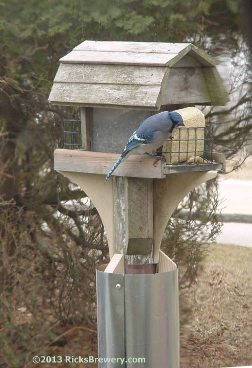 Squirrel baffle Bird feeder plans and Squirrel proof bird feeders on Pinterest