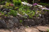 landscaping with rocks | Plants. Landscaping. Alpine hill ...