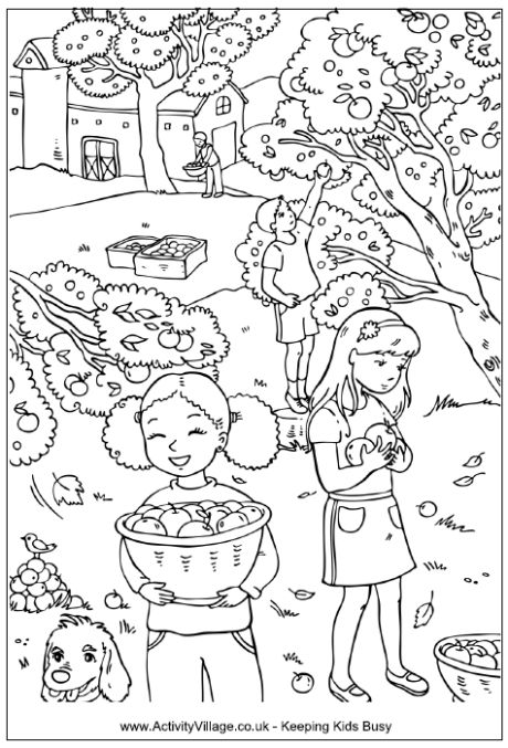 Picking apples colouring page, children picking apples in