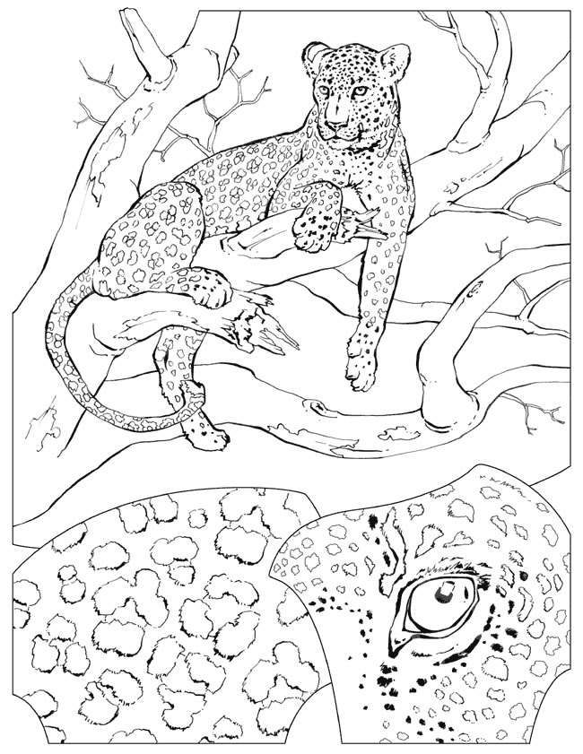 17 Best images about Coloring Pages/LineArt Animals