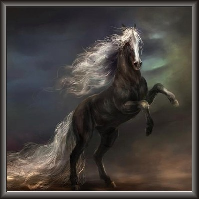 Gypsy Car Full Hd Wallpaper 55 Best Images About Rearing Horse On Pinterest Animal