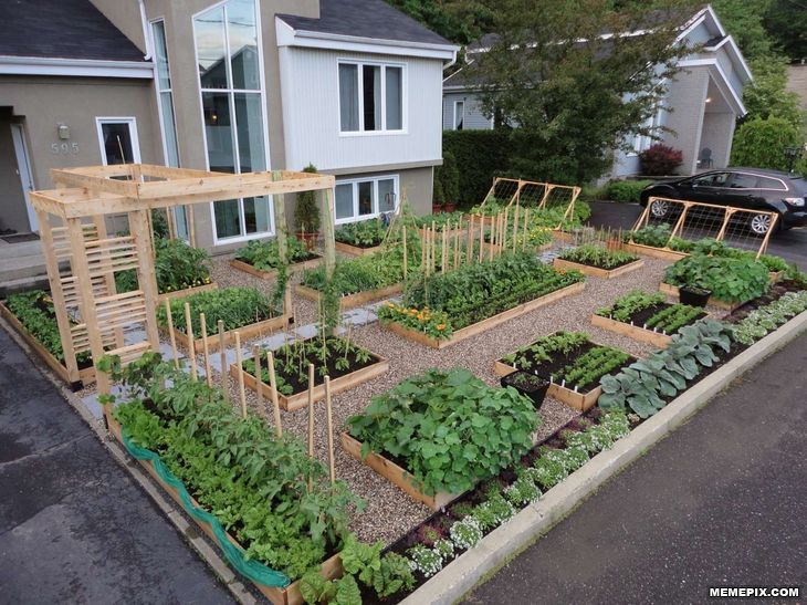 40 Best Images About Front Yard Veggie Gardens On Pinterest