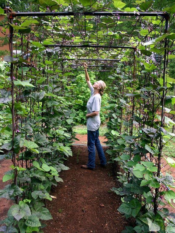 10 Best Ideas About Backyard Vegetable Gardens On Pinterest