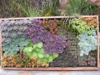 27 best images about Succulent wall on Pinterest | Gardens ...