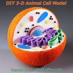 Simple Mitochondria Diagram Jdm Ae86 Wiring Awesome For Science Projects! How To Diy A 3-d Model Of An Animal Cell. Craftsncoffee.com ...