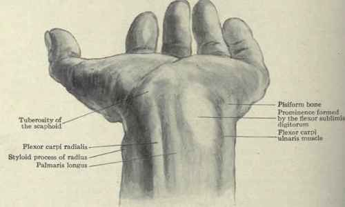 Hand Ligaments And Tendons Diagram Chart Diagrams And Charts With