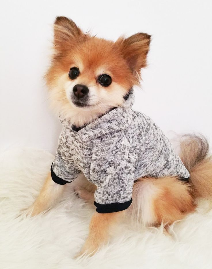 17 Best ideas about Small Dog Clothes on Pinterest