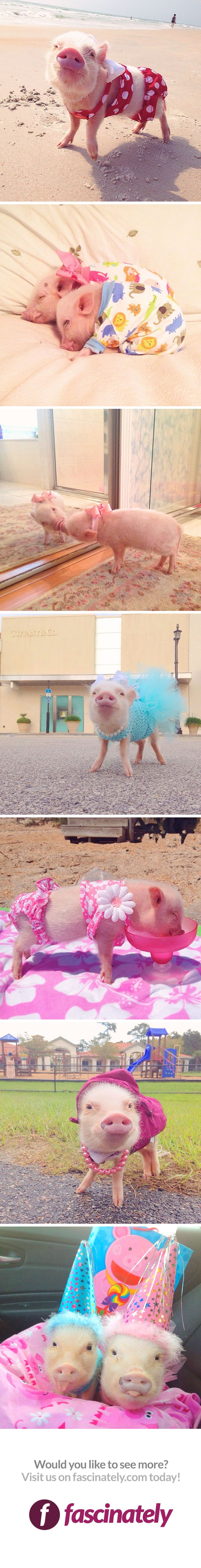 Meet the most adorable, popular pig on instagram! Shes pretty stylish, too – she loves to lay out