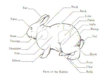 142 best images about A &B Netherland Dwarf Rabbitry on
