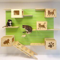 17 Best Ideas About Cat Climbing Wall On Pinterest Cat
