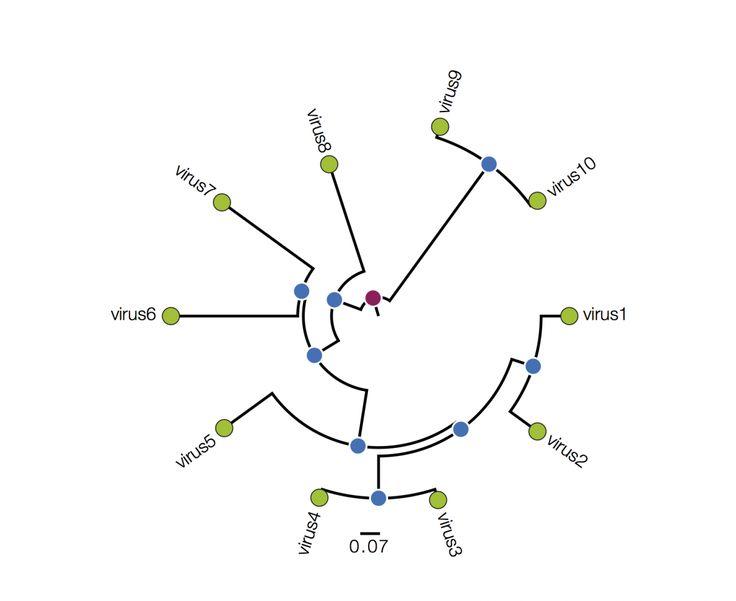 Best 25+ Phylogenetic tree ideas on Pinterest
