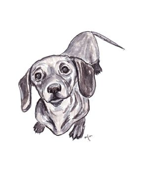 Cute Lockets Wallpaper 25 Best Ideas About Dachshund Drawing On Pinterest