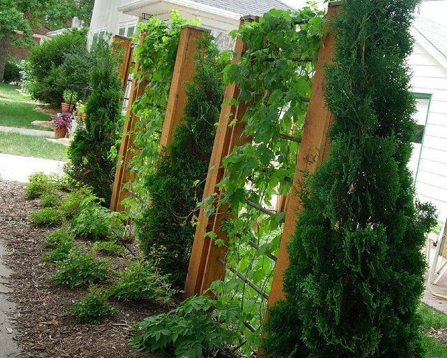 25 Best Ideas About Privacy Landscaping On Pinterest Backyard