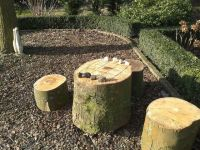 What to do with tree stumps.