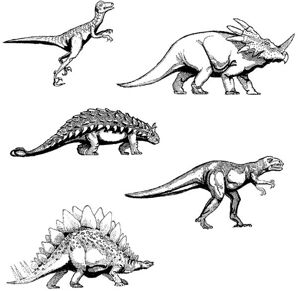 14 best images about DINOSAURS on Pinterest