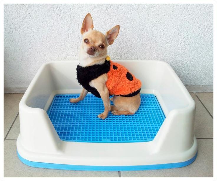 Bao portatil para perros ideal para los que viven en deptos con rejilla La rejilla permite el paso de la orina hasta la bandeja del fondo do