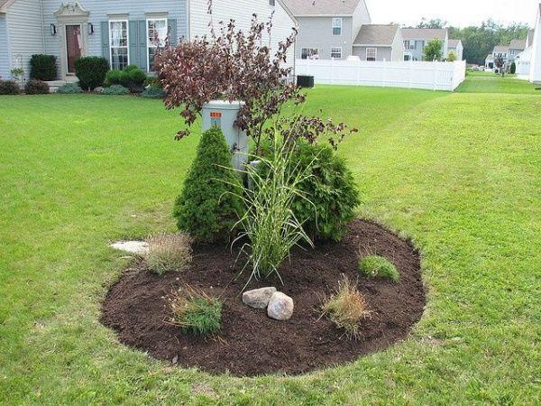 plants hide utility boxes landscaping
