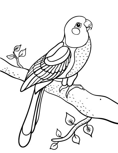 Printable parrot coloring page. Free PDF download at http