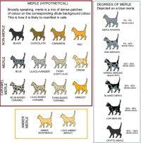 Picture | cats | Pinterest | Genetics, Cat and Cat colors